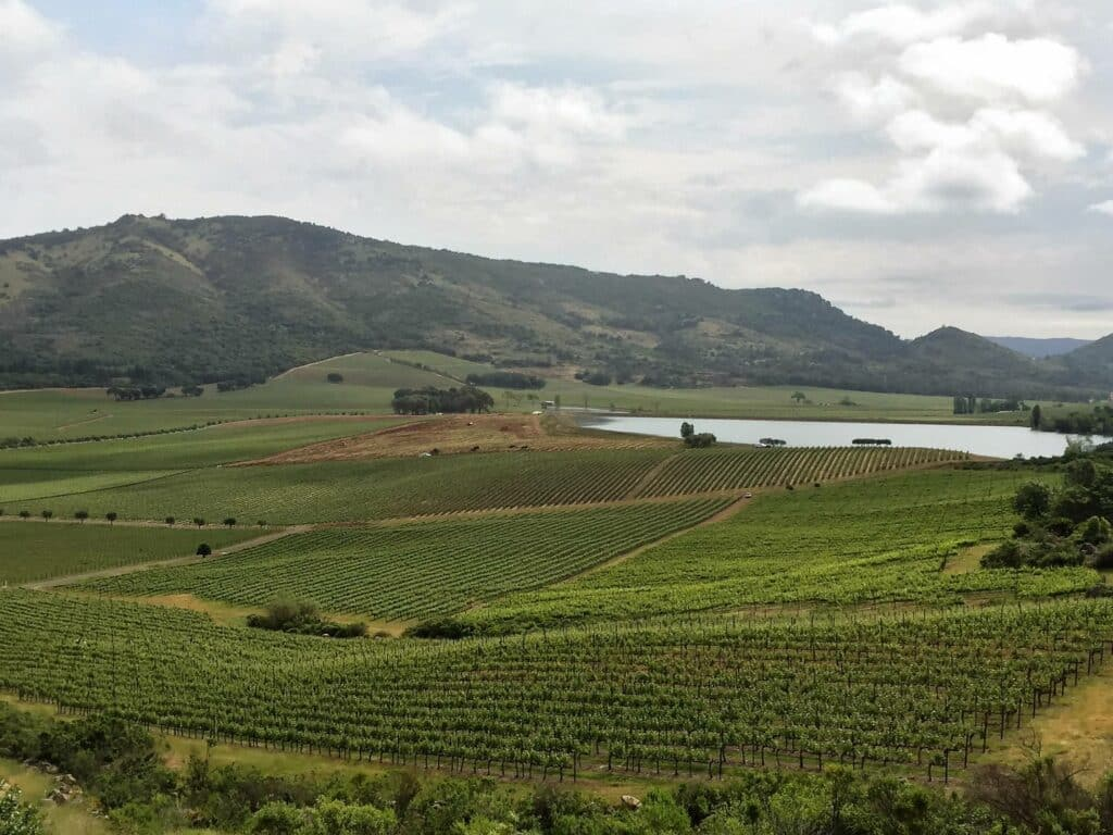 Mountain top vineyard