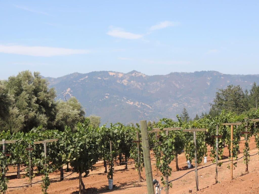 Mountain Vineyards